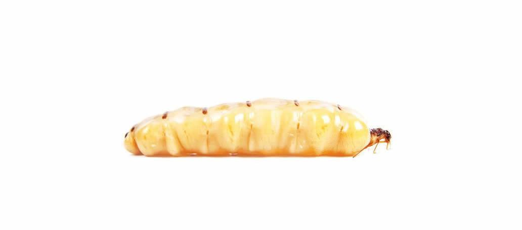 disinfestazione tarli insetti del legno